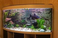 Панорамный аквариум компании Aquanika