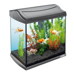 tetra-aquaart-goldfish-discover-line-30l3