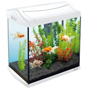 etra-aquaart-goldfish-discover-line-30lbelyj