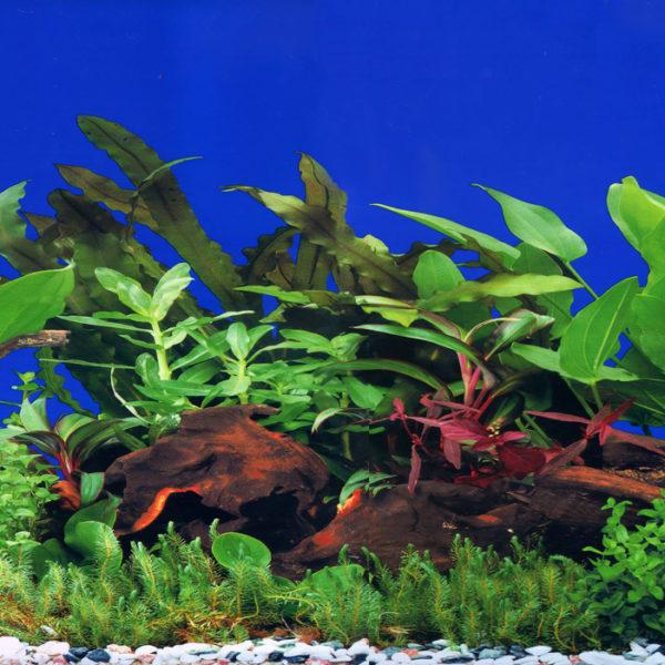 Фон для аквариума