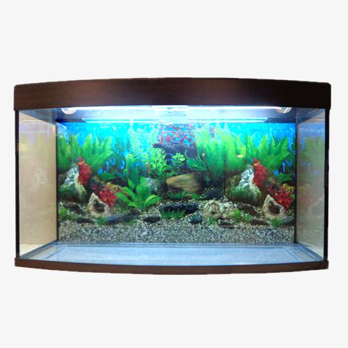 akvarium-vizhn-2
