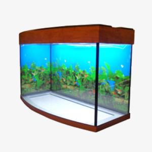 akvarium-vizhn