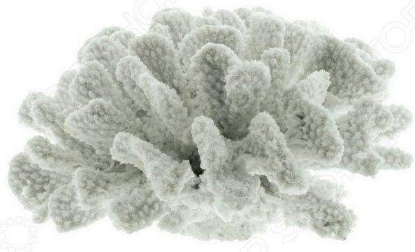 корал белый